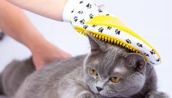 AGA488_3 Asistencia a la Atención Clínica en Centros Veterinarios