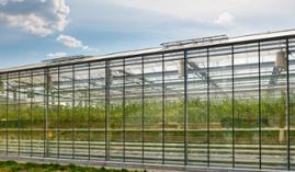 AGAU0110 Producción de Semillas y Plantas en Vivero (Online)